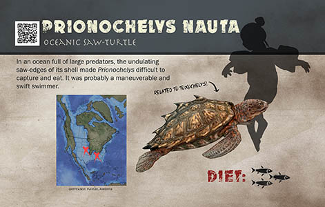 Prionochelys sign
