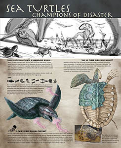 Fossil sea turtle exhibit graphic