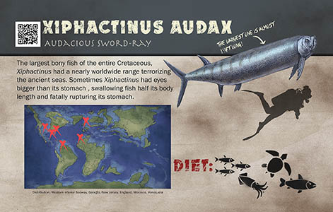 Xiphactinus sign